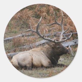 Rocky Mountain Elk Classic Round Sticker