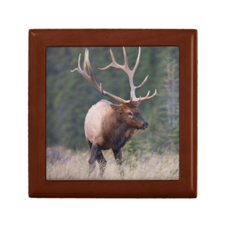 Rocky Mountain Elk Gift Box
