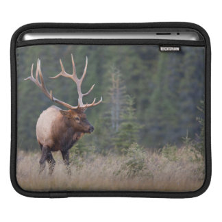 Rocky Mountain Elk iPad Sleeve