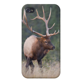 Rocky Mountain Elk iPhone 4 Covers