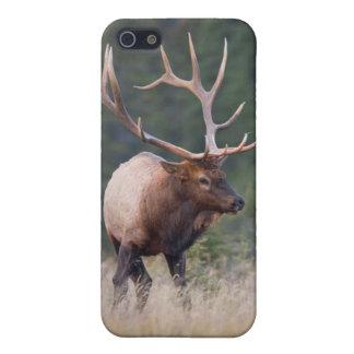 Rocky Mountain Elk iPhone 5/5S Case