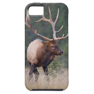Rocky Mountain Elk iPhone 5 Cases