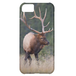 Rocky Mountain Elk iPhone 5C Case