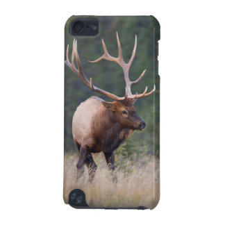 Rocky Mountain Elk iPod Touch (5th Generation) Covers