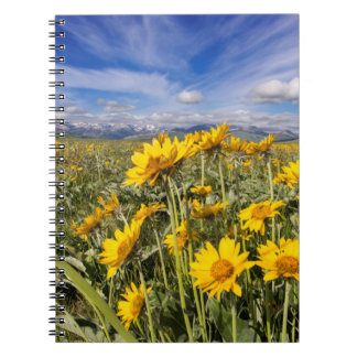 Rocky Mountain Front Range Notebook