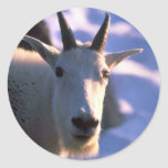 Rocky Mountain Goat Head Round Sticker