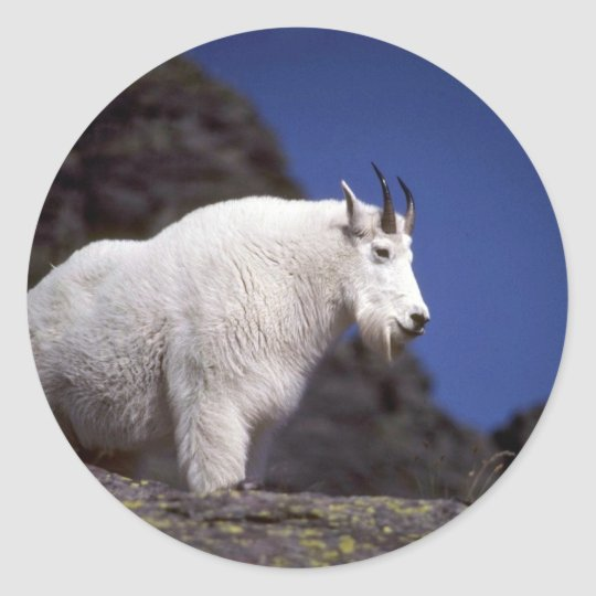 Rocky mountain goat (Large male) Classic Round Sticker