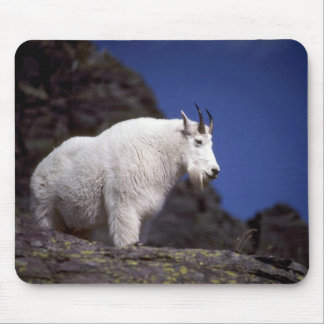 Rocky mountain goat (Large male) Mouse Pads