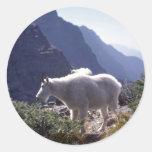 Rocky mountain goat round sticker