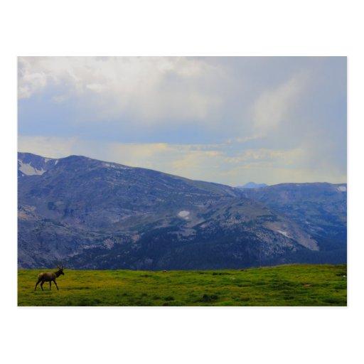 Rocky Mountain National Park, Colorado Post Card