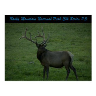 Rocky Mountain National Park Elk Series #3 Postcard