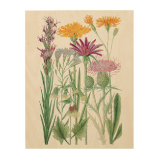 Rocky Mountain Wildflowers Botanical Wood Wall Art