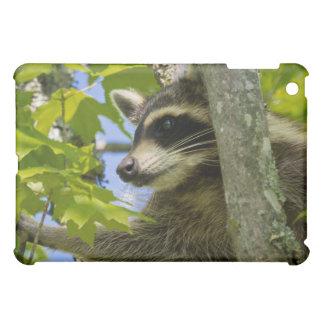 Rocky Raccoon iPad Mini Cases