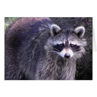 Rocky the Raccoon Card