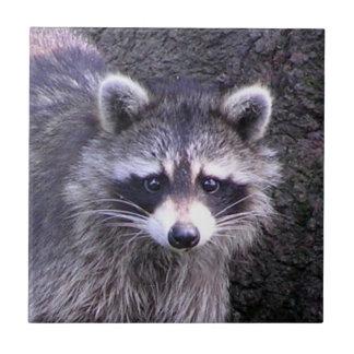 Rocky the Raccoon Tile