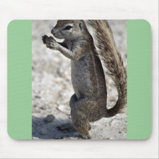 Rodent eating mouse pads