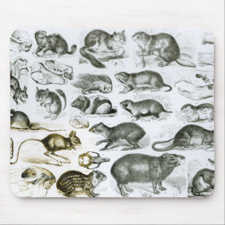 Rodentia-Rodents or Gnawing Animals Mouse Pads