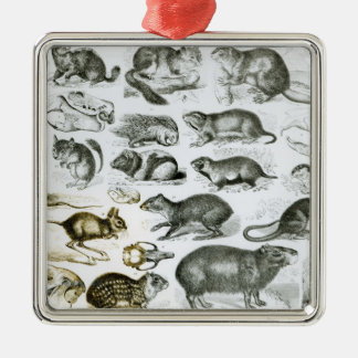 Rodentia-Rodents or Gnawing Animals Silver-Colored Square Decoration