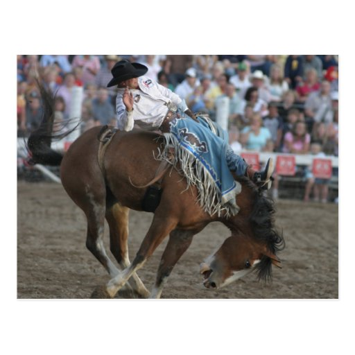 Rodeo Bucking Bronco Postcards