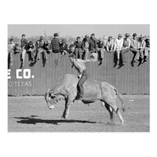 Rodeo Bull Rider, 1940 Post Cards