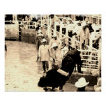 Rodeo Bull Rider Poster