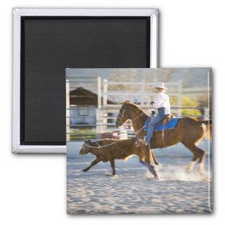 Rodeo cowboy calf roping refrigerator magnets
