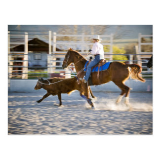 Rodeo cowboy calf roping postcard