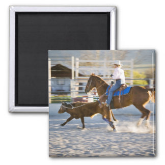 Rodeo cowboy calf roping square magnet