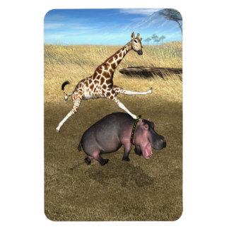 Rodeo Hippo Rectangular Photo Magnet