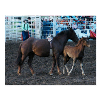 Rodeo Mare and Foal Postcard
