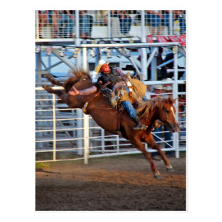 Rodeo Post Cards