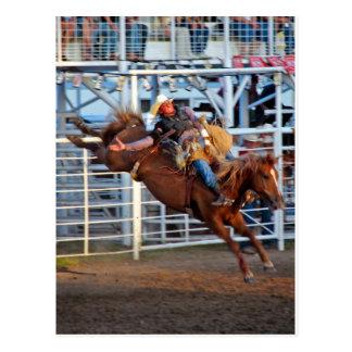 Rodeo! Postcard
