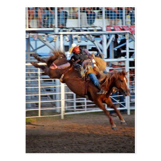 Rodeo! Post Cards