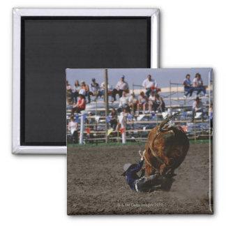 Rodeo rider falling from bull refrigerator magnet