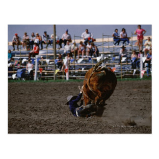 Rodeo rider falling from bull postcard