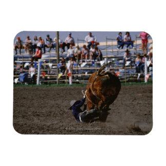 Rodeo rider falling from bull rectangular magnet