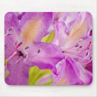 Rododendron Mouse Pad