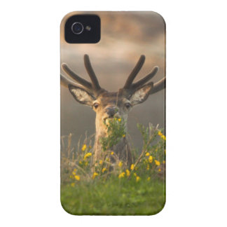Roe Deer Buck BlackBerry Bold Case-Mate