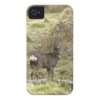 Roe Deer Buck iPhone4/4S Case-Mate ID iPhone 4 Covers