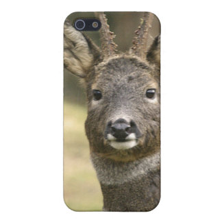 Roe Deer Buck iPhone 4 Case