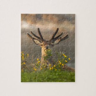 Roe Deer Buck Puzzle/Jigsaw Puzzle with Tin