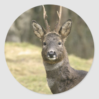Roe Deer Buck Stickers