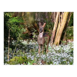 Roe deer in snowdrops postcard