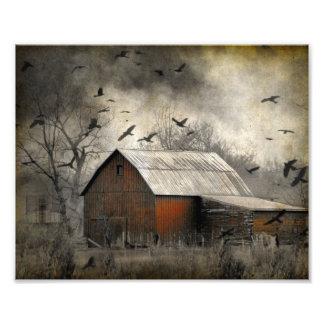 Roguish Ravens Photo