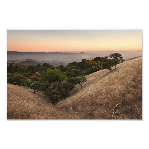 Rolling California hillside at sunset Photo Art