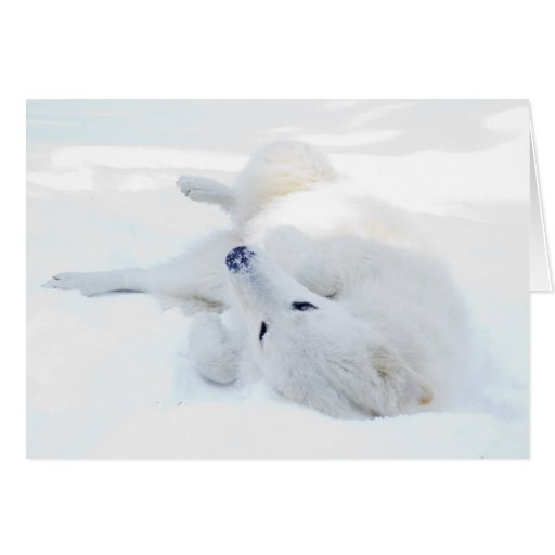 Rolling in the snow greeting cards
