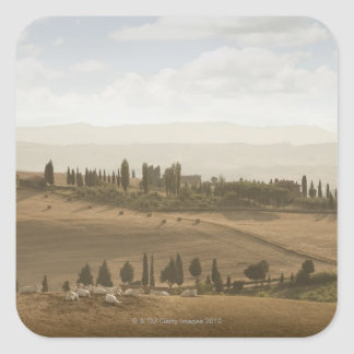 Rolling landscape, Tuscany, Italy Square Sticker