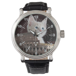 Roman cats watch