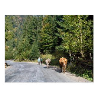 Romania, Moldova, walking the cows Postcard