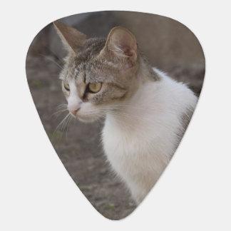 Romania, Transylvania, Sighisoara. Pet cat. Guitar Pick